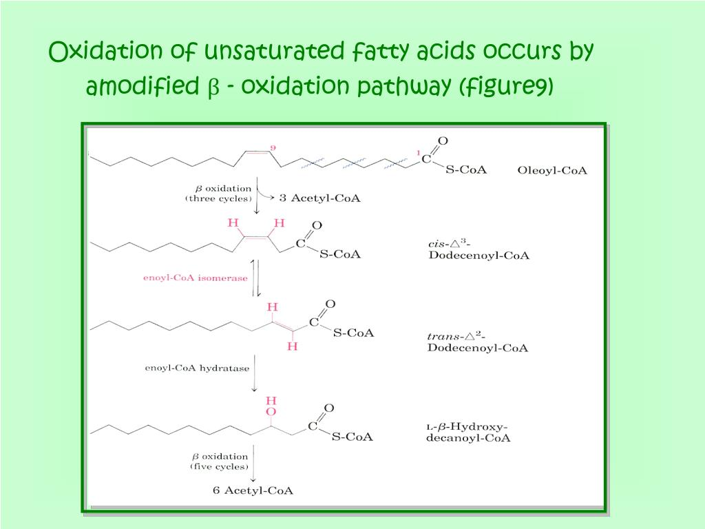 Oxidation of unsaturated fatty acids occurs by amodified β - oxidation pathway (figure9)
