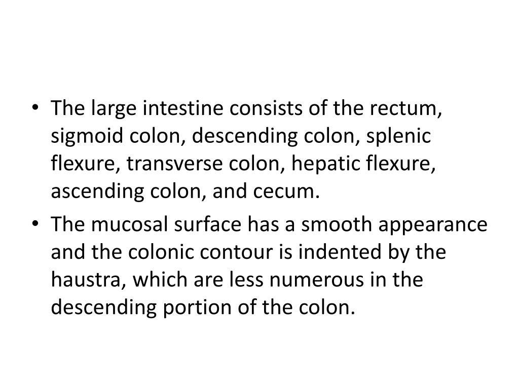 The large intestine consists of the rectum, sigmoid colon, descending colon, splenic flexure, transverse colon, hepatic flexure, ascending colon, and cecum.