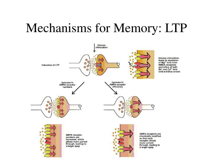 Mechanisms for Memory: LTP