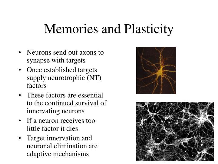Memories and Plasticity