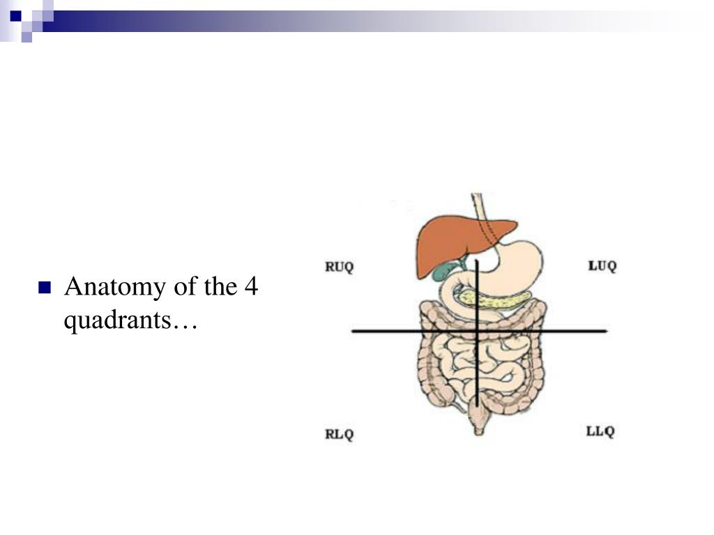 Anatomy of the 4 quadrants…