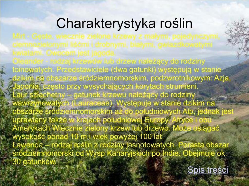 Mirt - Gęste, wiecznie zielone krzewy z małymi, pojedynczymi, ciemnozielonymi liśćmi i drobnymi, białymi, gwiazdkowatymi kwiatami. Owocem jest jagoda.