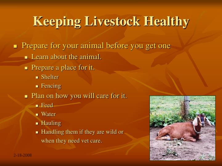 Keeping livestock healthy2