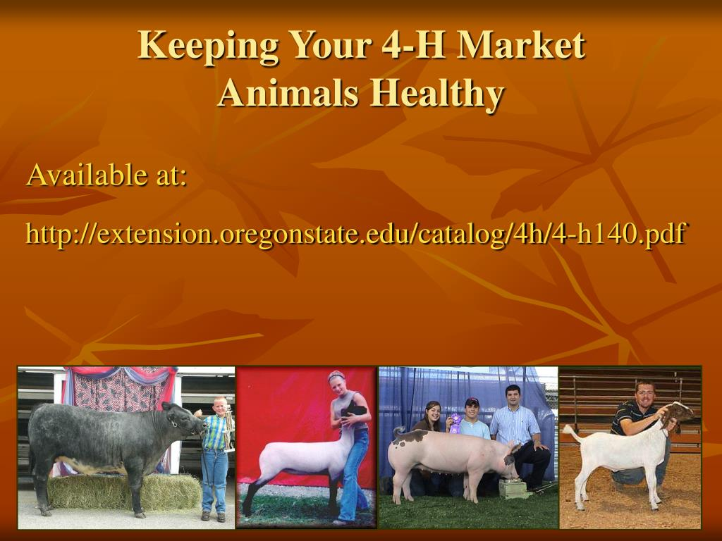 Keeping Your 4-H Market