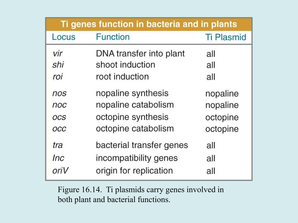 Figure 16.14.  Ti plasmids carry genes involved in both plant and bacterial functions.