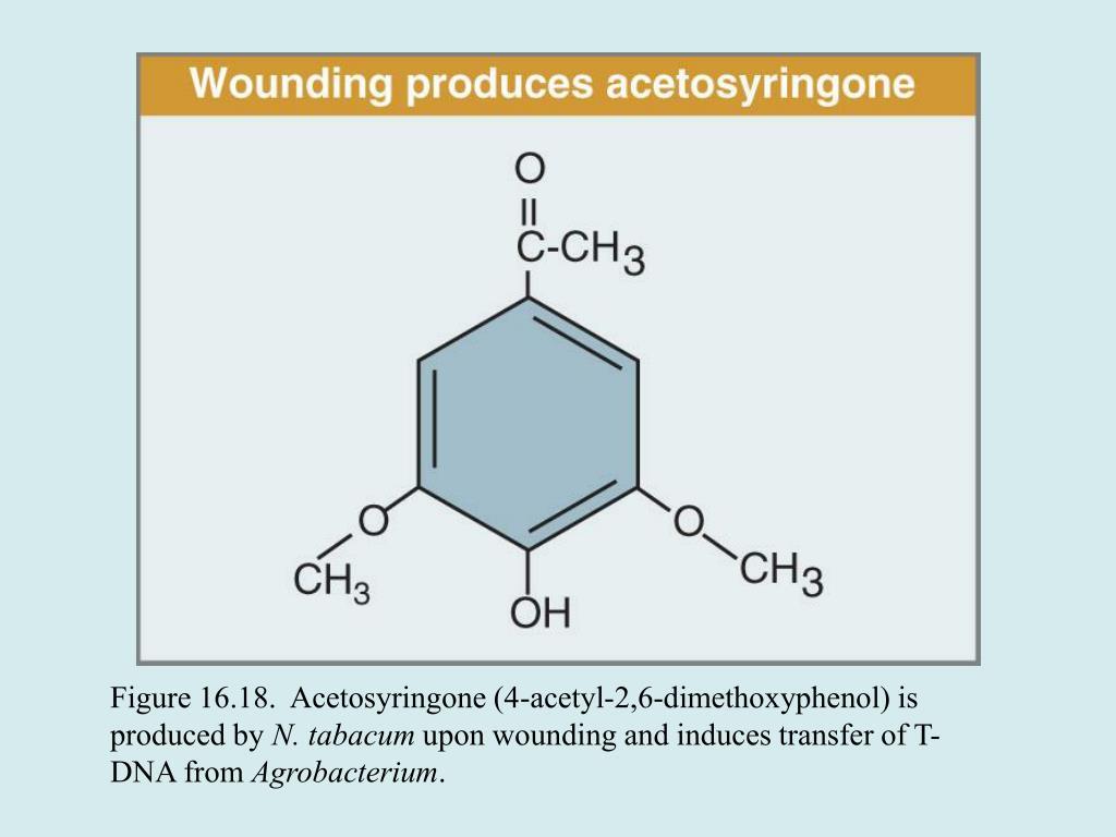 Figure 16.18.  Acetosyringone (4-acetyl-2,6-dimethoxyphenol) is produced by