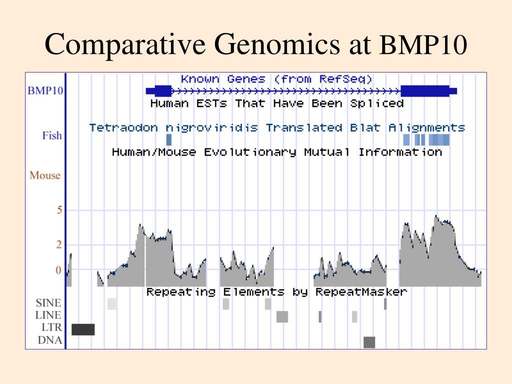 Comparative Genomics at