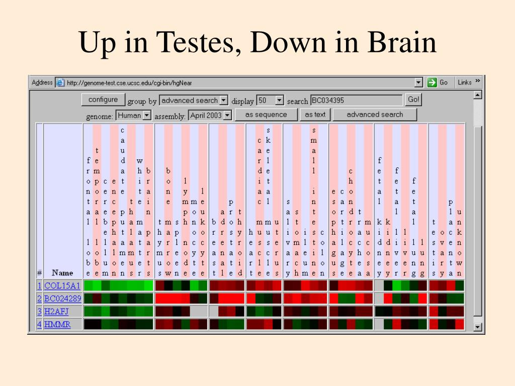 Up in Testes, Down in Brain