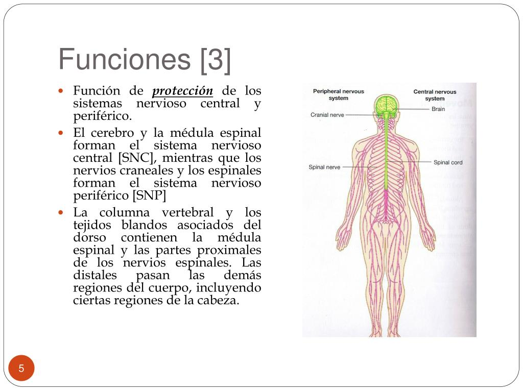 Funciones [3]