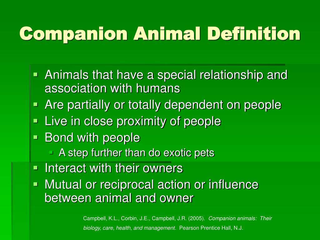 Companion Animal Definition