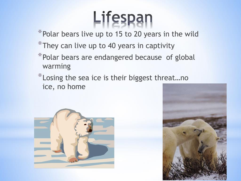 Polar bears live up to 15 to 20 years in the wild