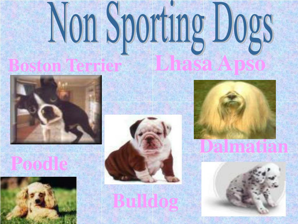 Non Sporting Dogs