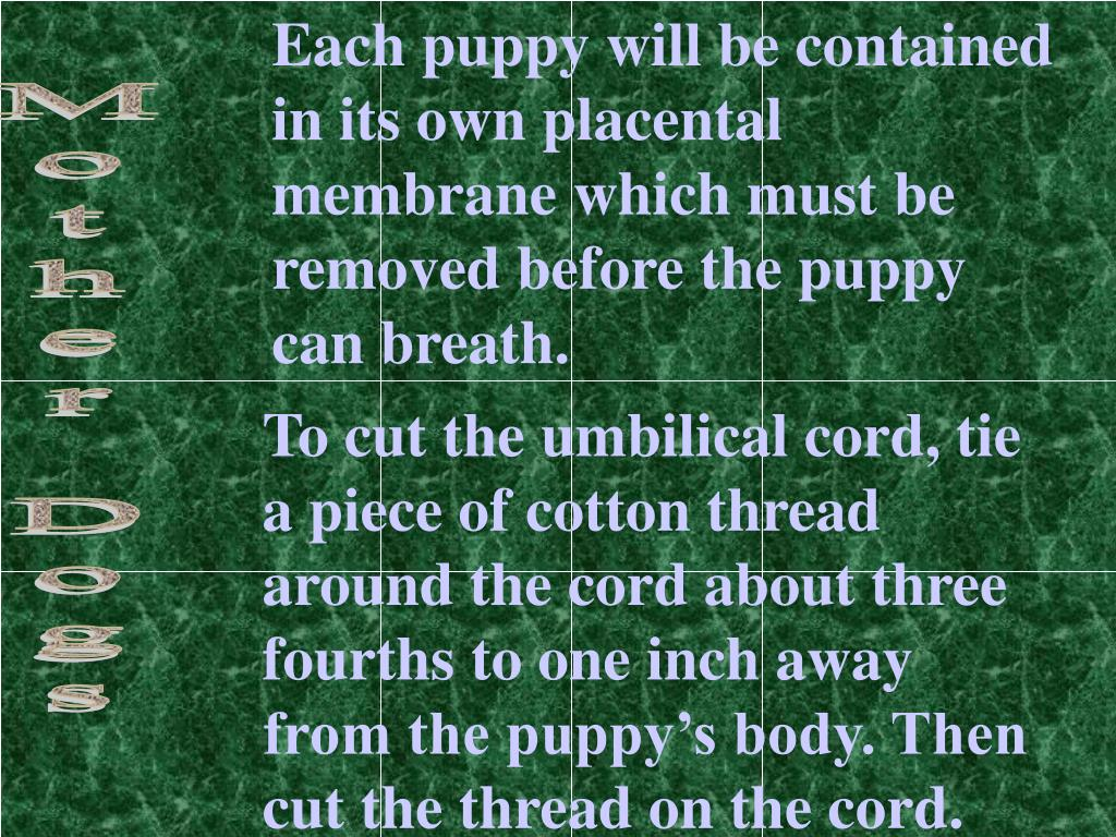 Each puppy will be contained in its own placental membrane which must be removed before the puppy can breath.