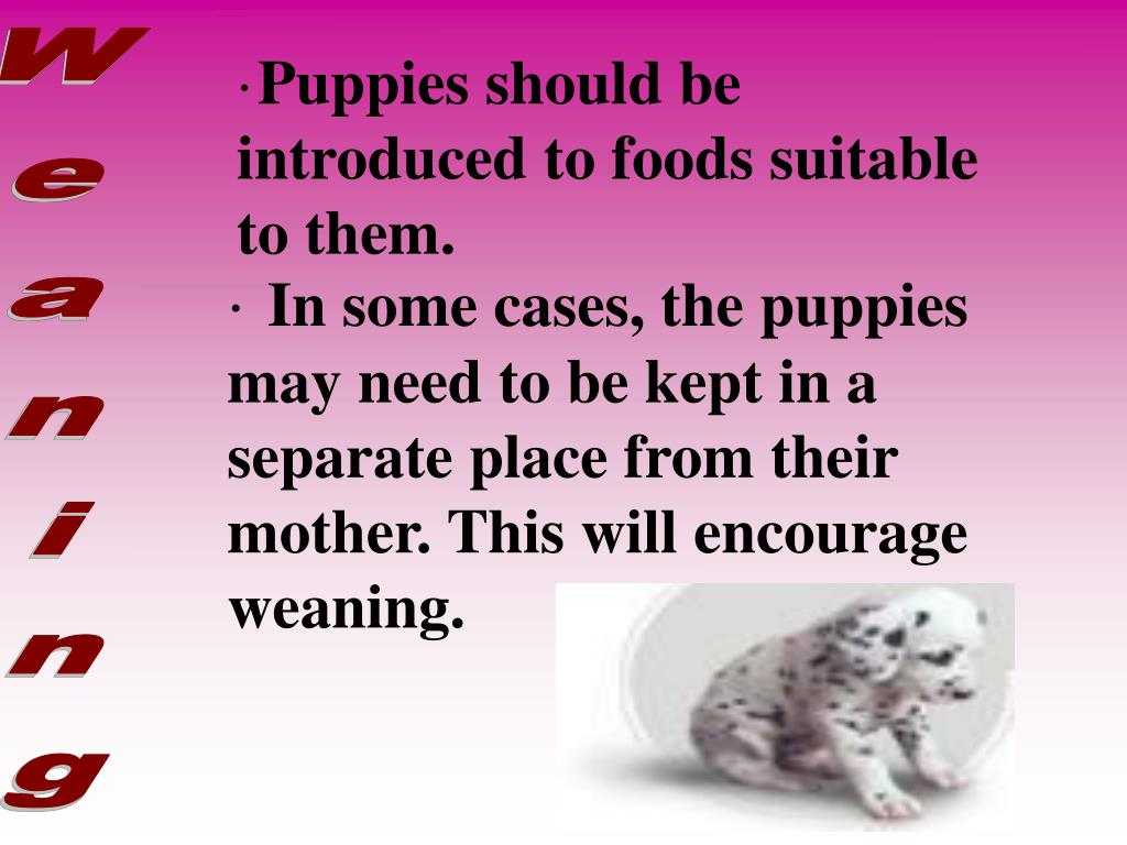 Puppies should be introduced to foods suitable to them.