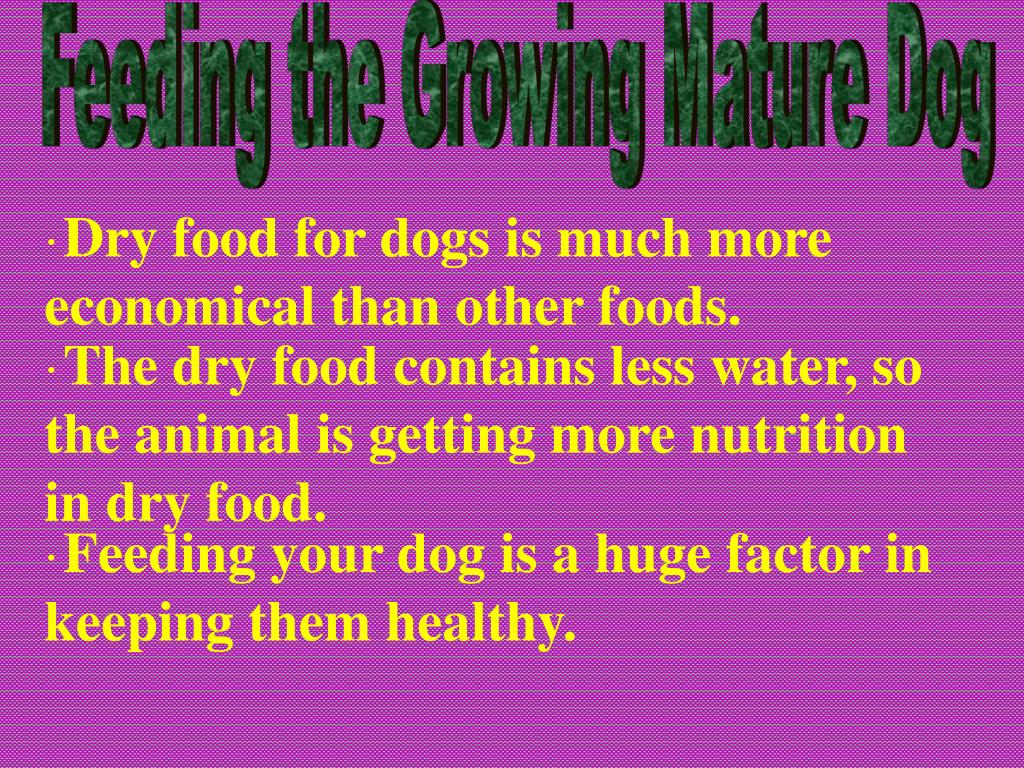 Feeding the Growing Mature Dog