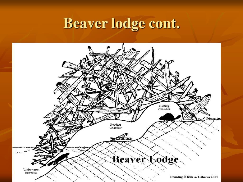 Beaver lodge cont.
