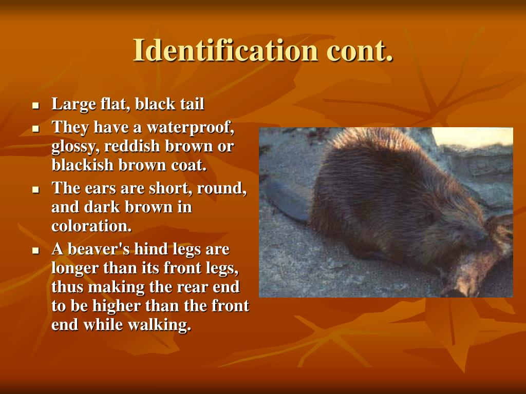 Identification cont.