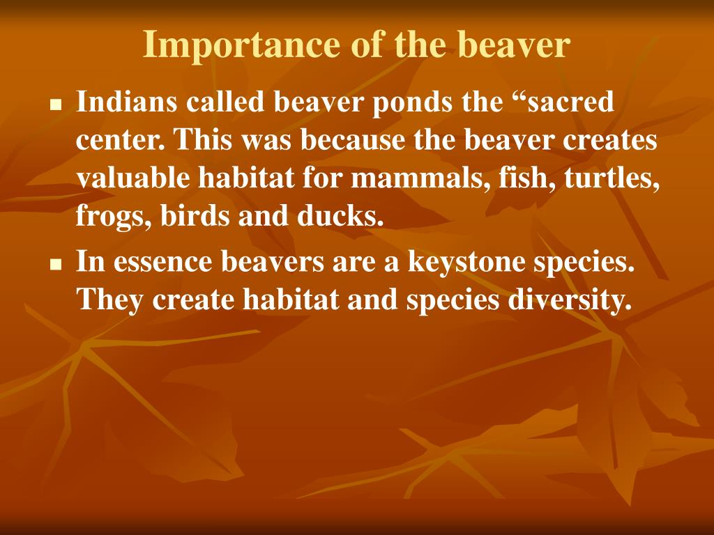 Importance of the beaver