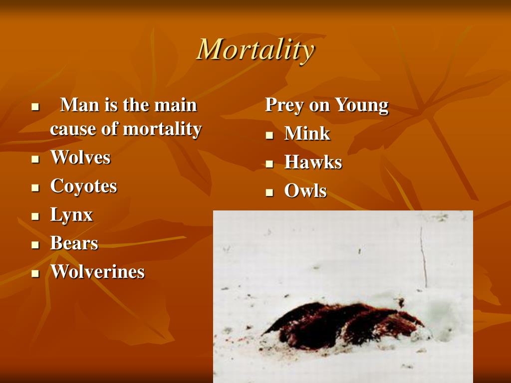 Man is the main cause of mortality