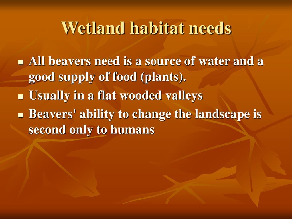 Wetland habitat needs