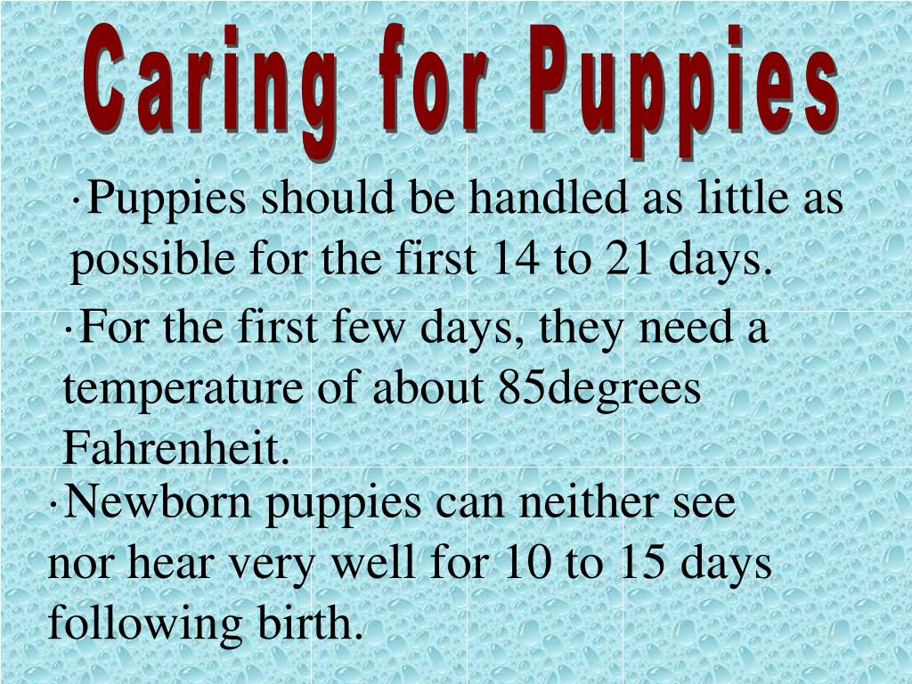 Caring for Puppies