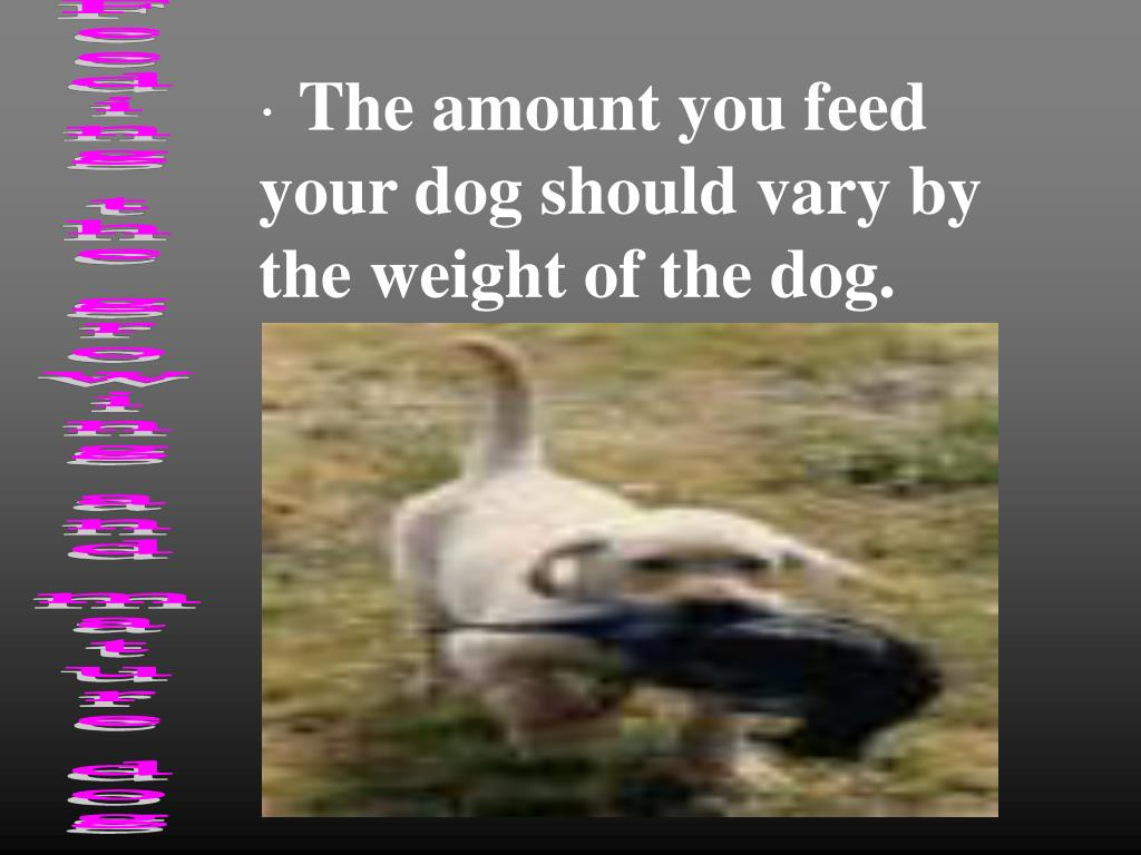 The amount you feed your dog should vary by the weight of the dog.