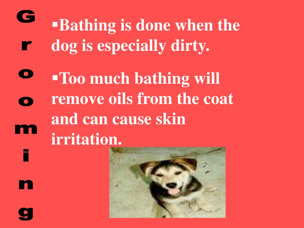 Bathing is done when the dog is especially dirty.