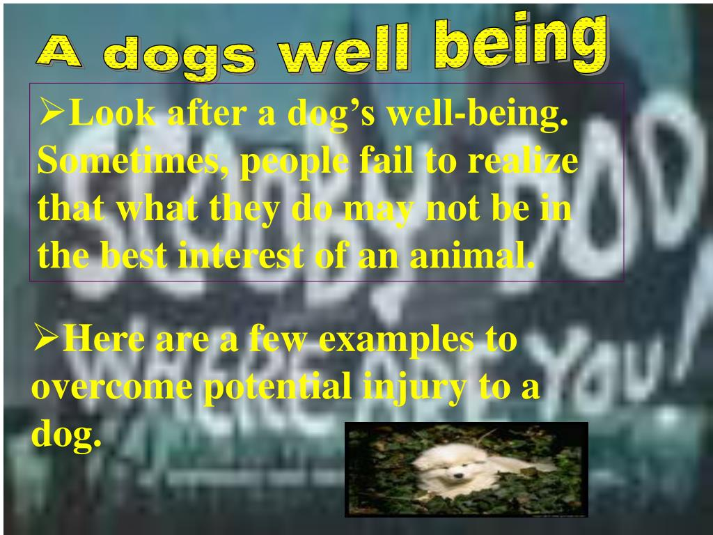 A dogs well being
