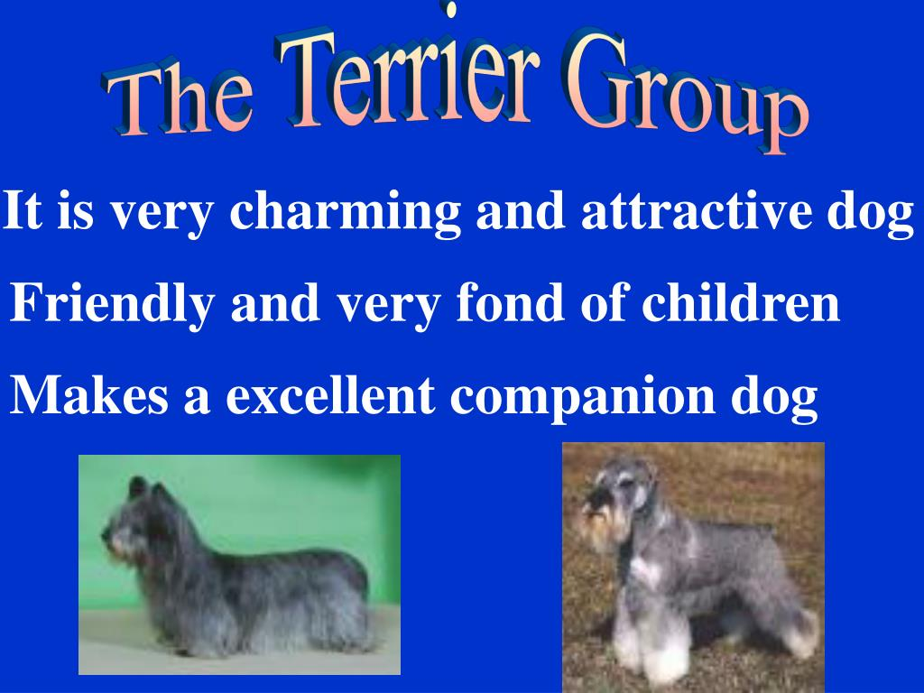 The Terrier Group