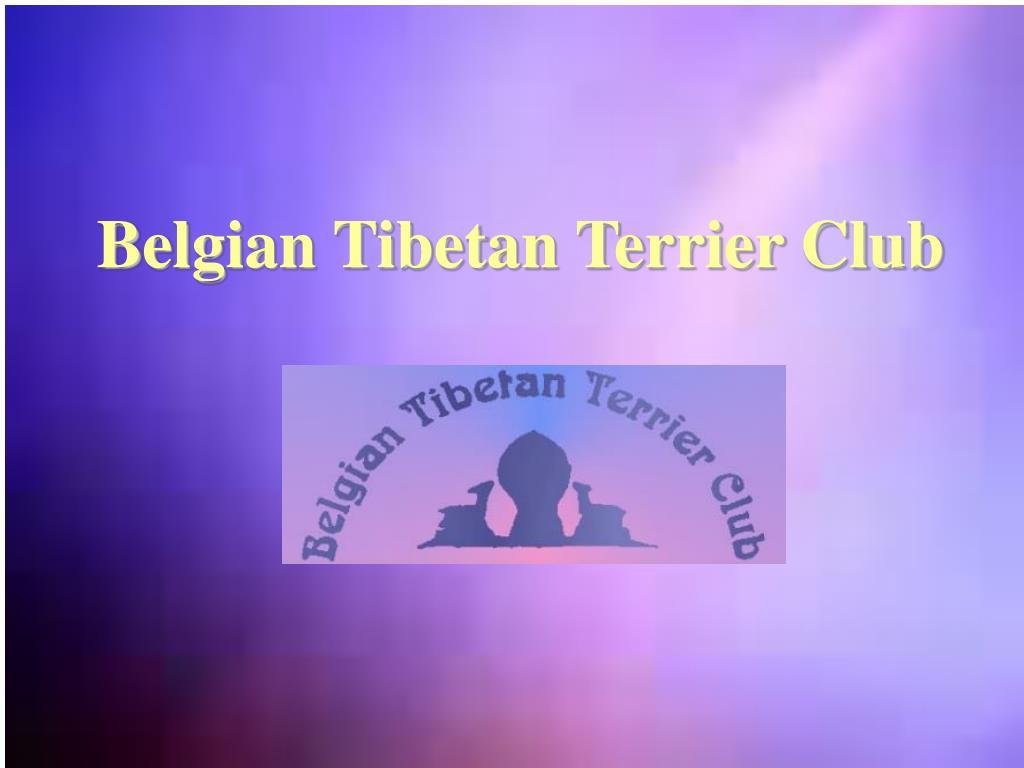 Belgian Tibetan Terrier Club