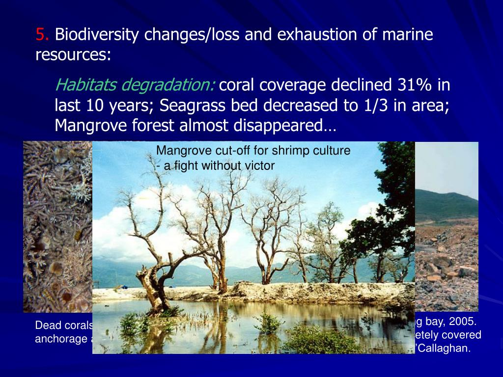 Mangrove cut-off for shrimp culture - a fight without victor