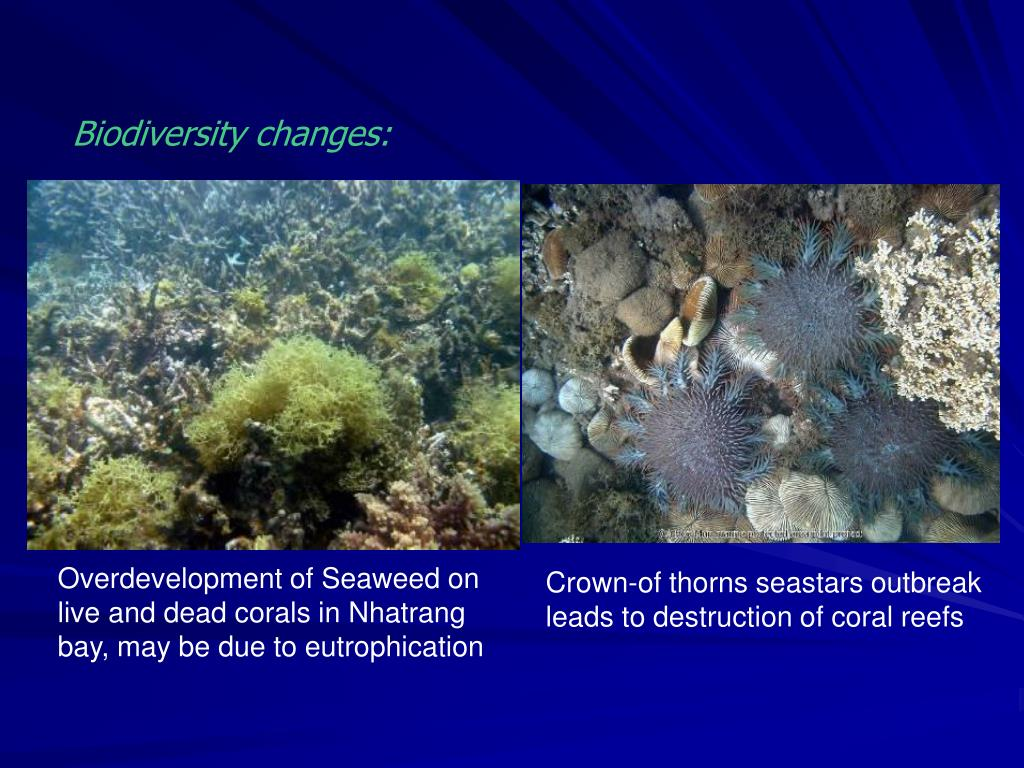 Overdevelopment of Seaweed on live and dead corals in Nhatrang bay, may be due to eutrophication