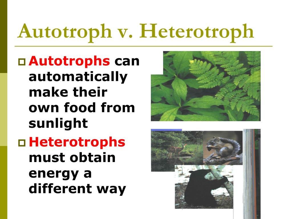 Autotroph v. Heterotroph