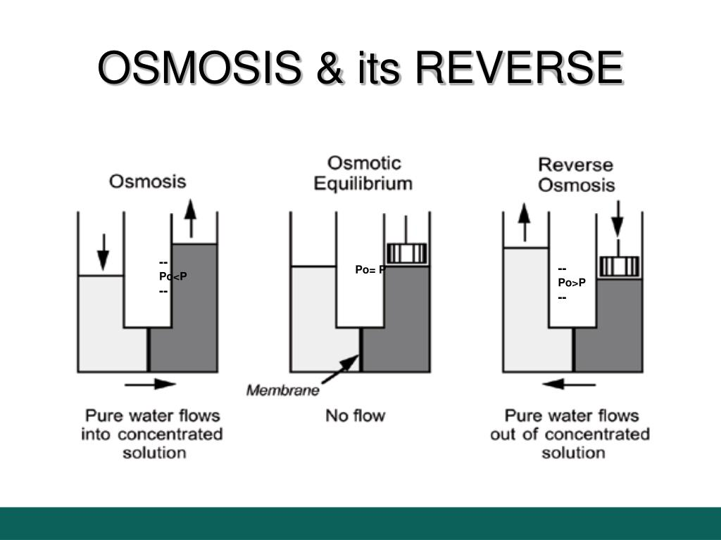 OSMOSIS & its REVERSE