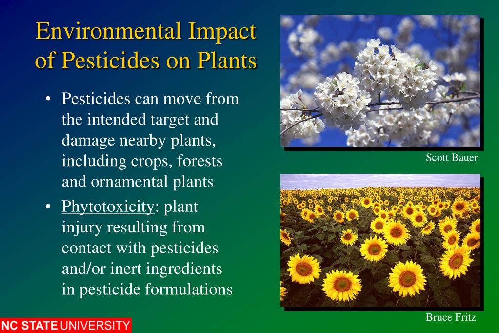 environmental effects of pesticides Health effects of pesticides may be acute or delayed in those who are exposed some pesticides can remain in the environment for prolonged periods of time.