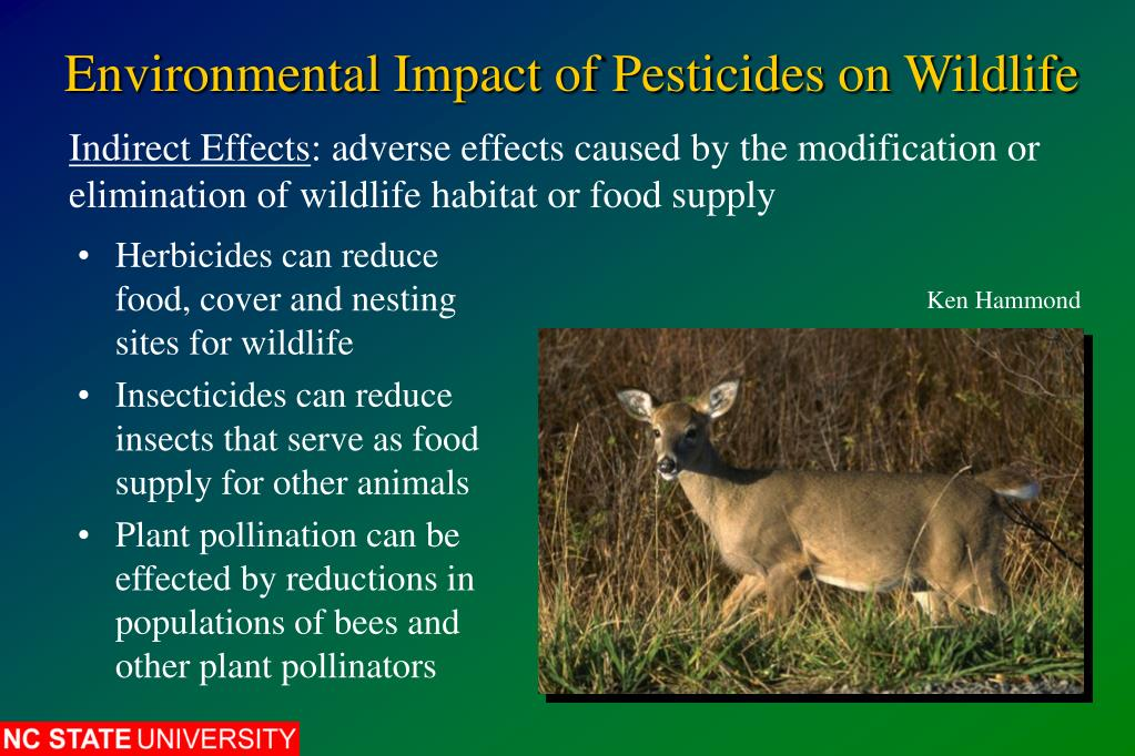 environmental effects of pesticides Gmos and pesticides: helpful or harmful by jennifer hsaio figures by krissy lyon barfoot p and brookes g key global environmental impacts of genetically modified (gm) crop use 1996-2012 (3 november 2014) landes bioscience food and pesticides.