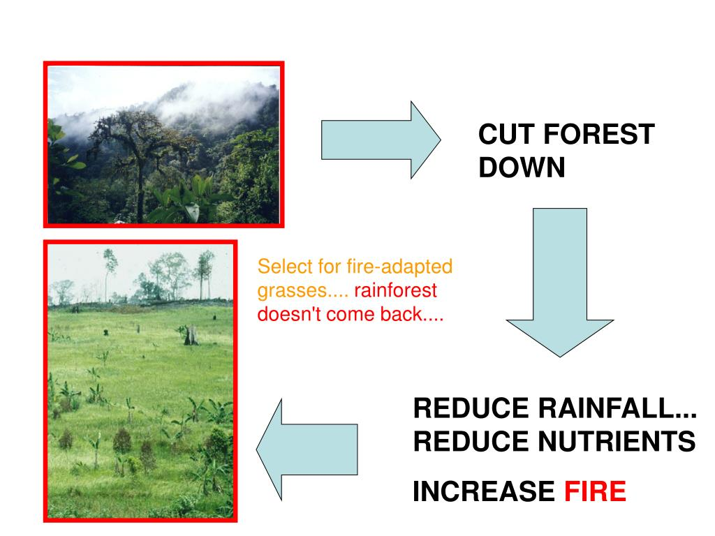 CUT FOREST DOWN