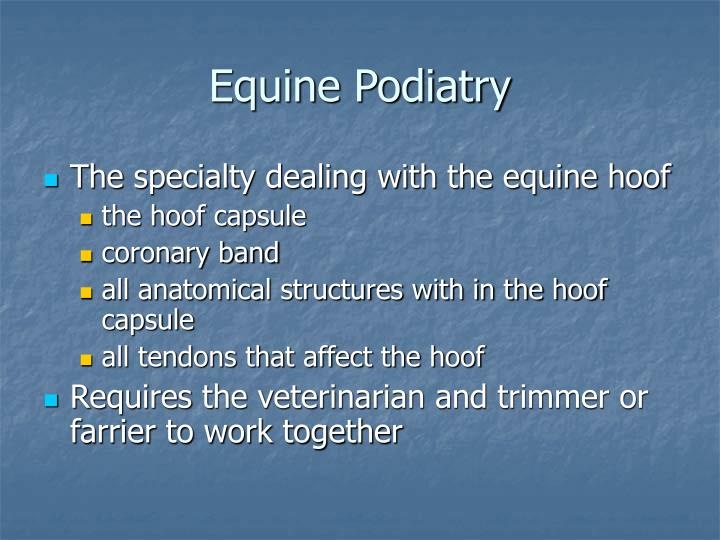 Equine podiatry