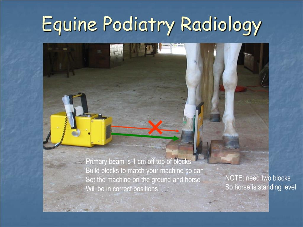 Equine Podiatry Radiology