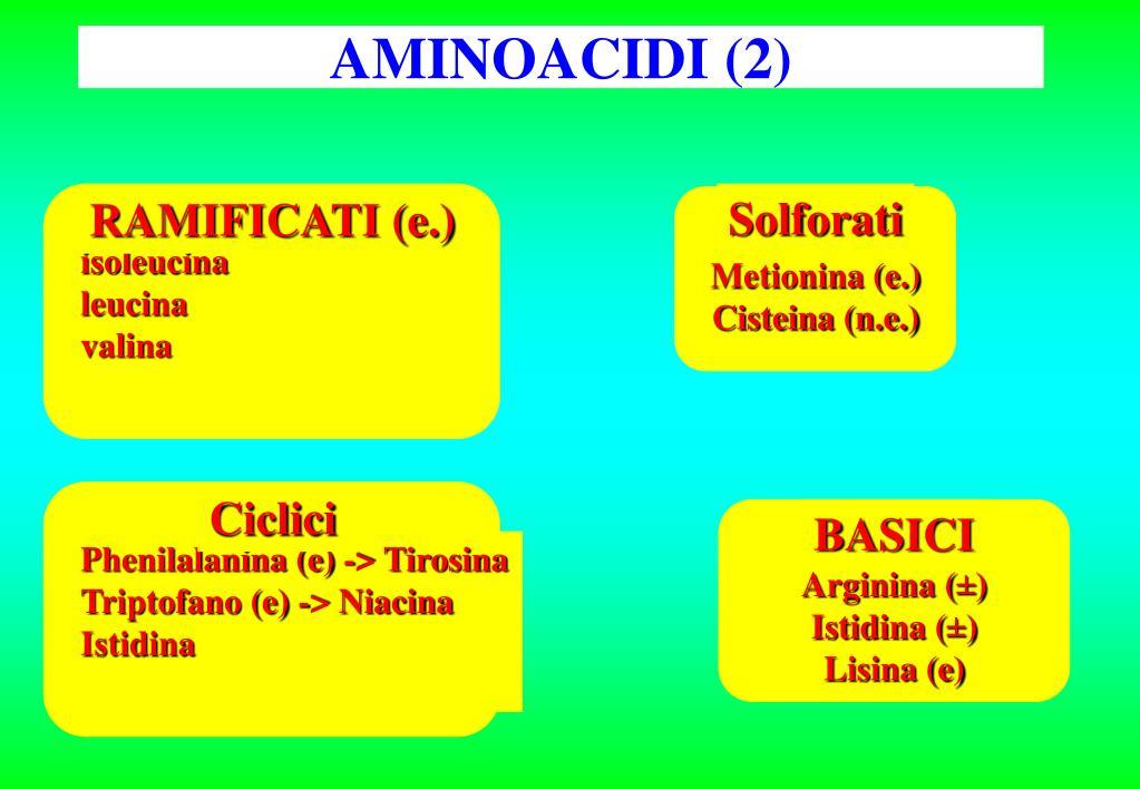 RAMIFICATI (e.)