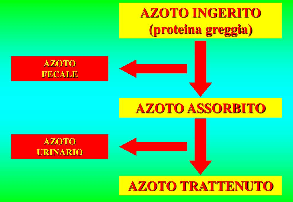 AZOTO INGERITO