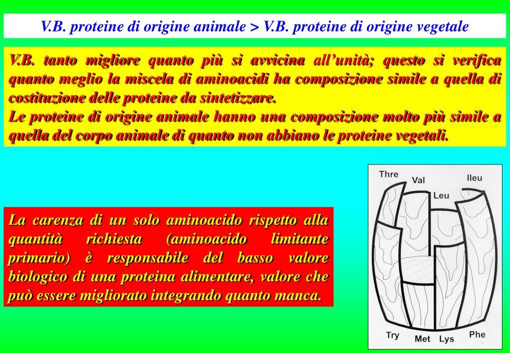 V.B. proteine di origine animale > V.B. proteine di origine vegetale