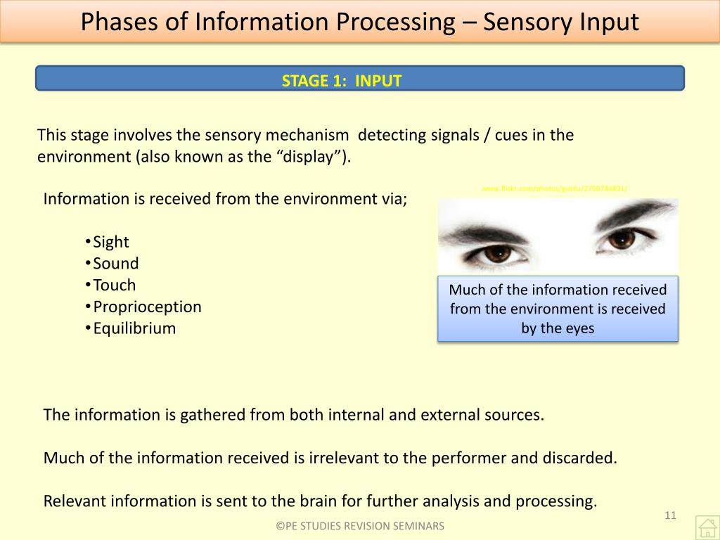 Phases of Information Processing – Sensory Input