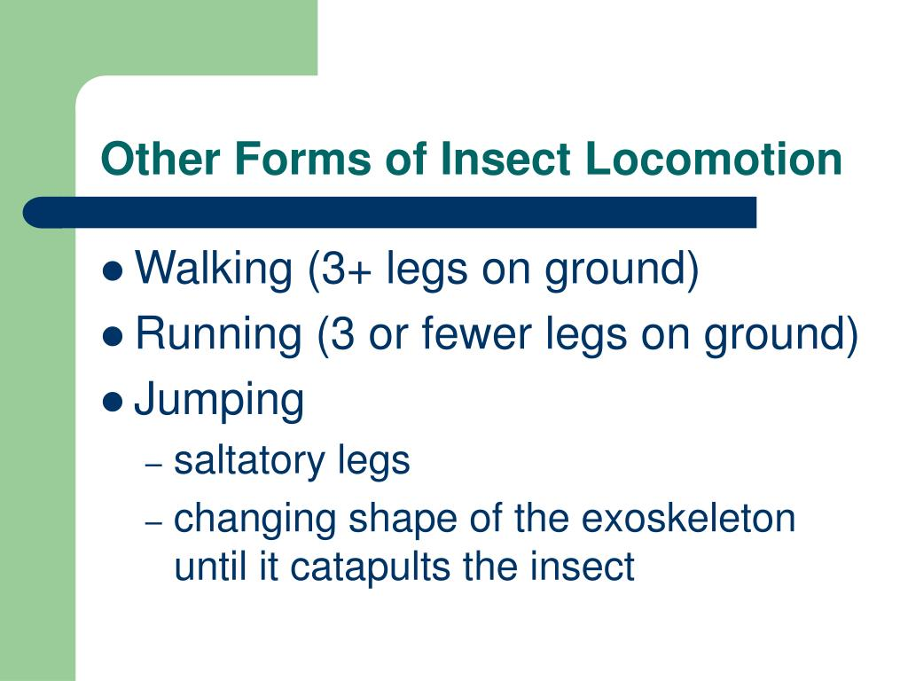 Other Forms of Insect Locomotion