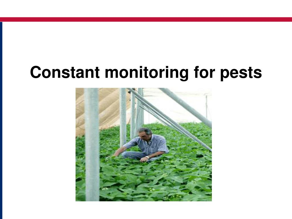 Constant monitoring for pests