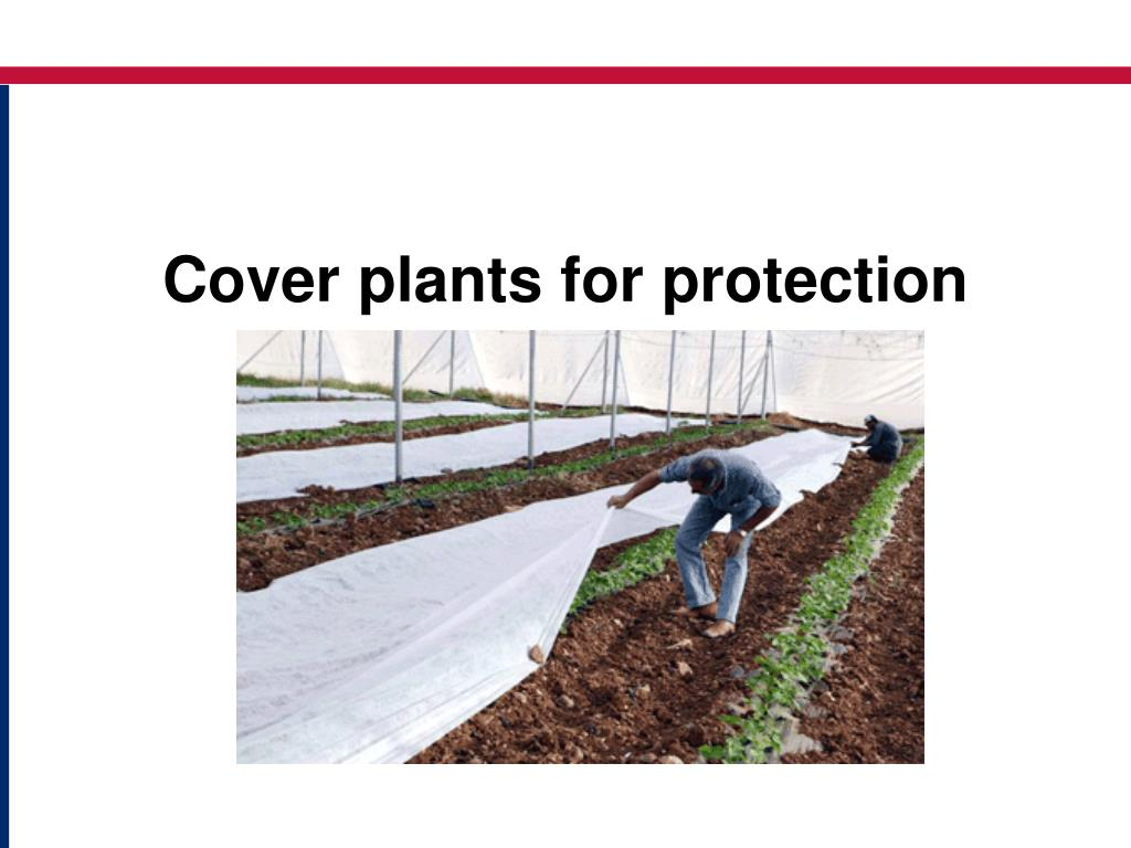 Cover plants for protection