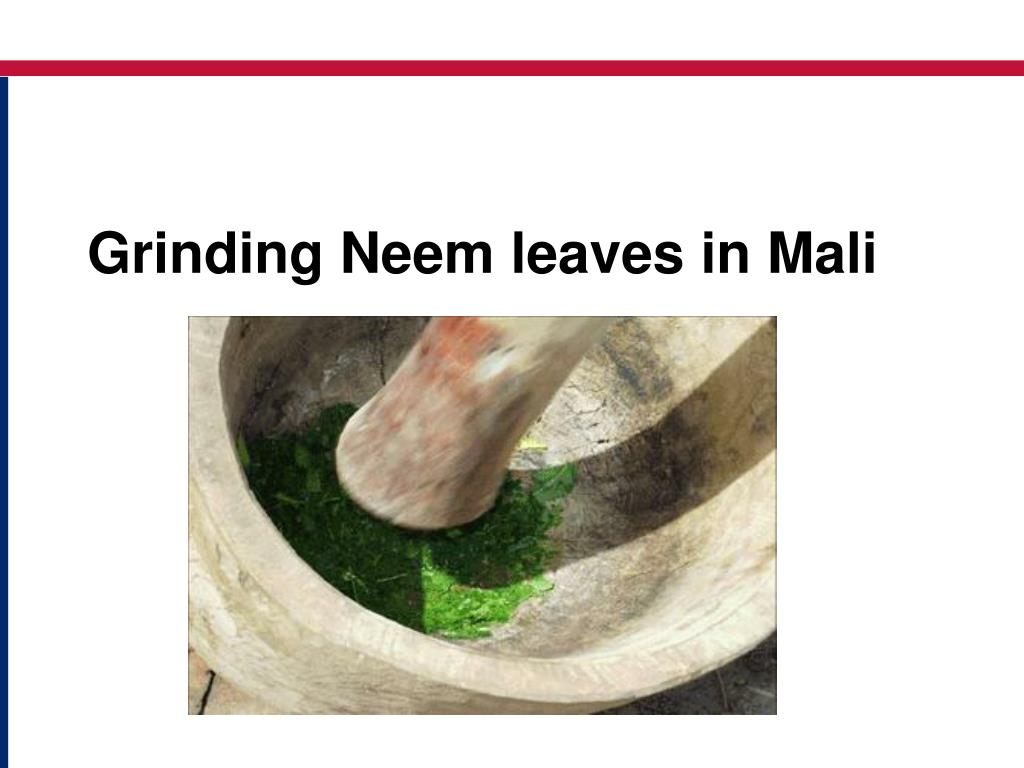 Grinding Neem leaves in Mali