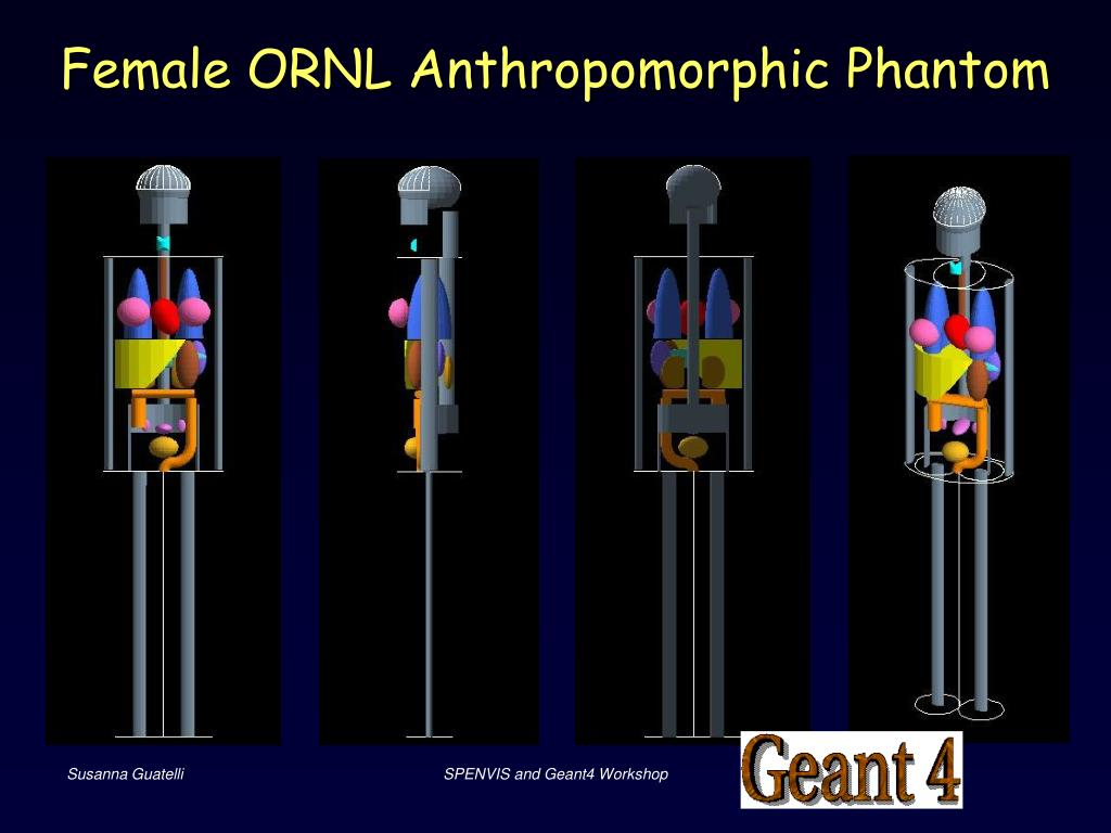Female ORNL Anthropomorphic Phantom