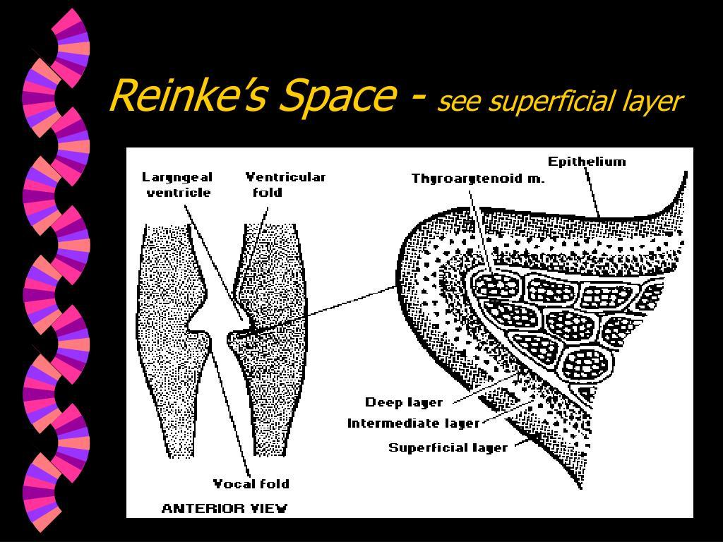 Reinke's Space -