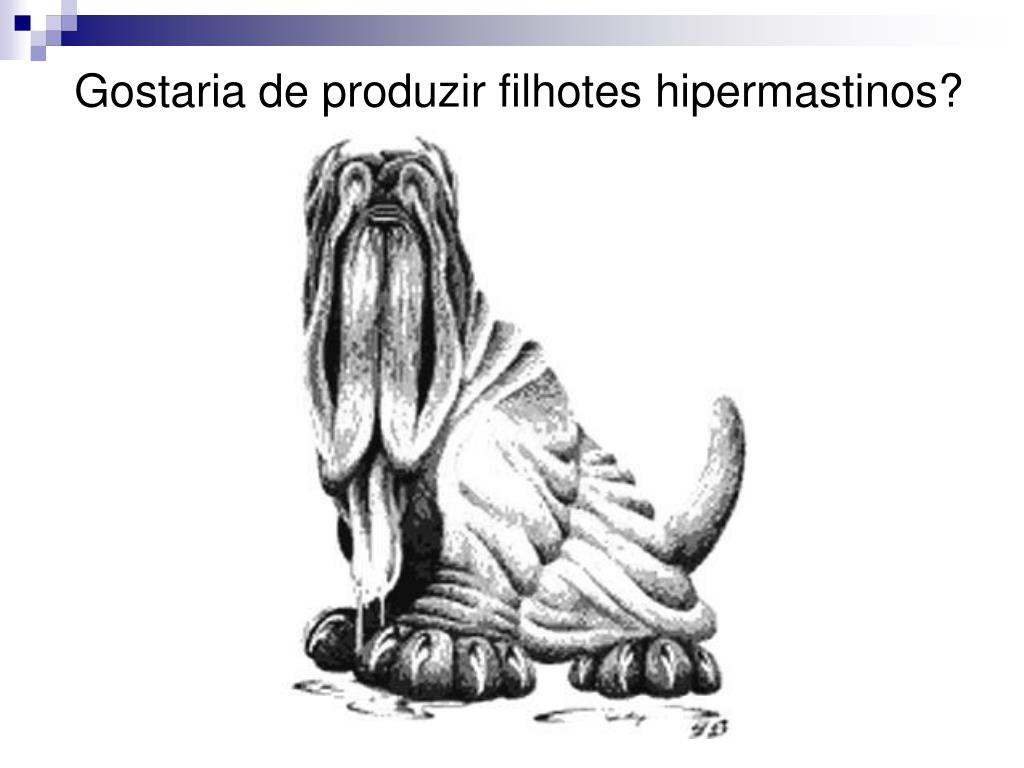 Gostaria de produzir filhotes hipermastinos?
